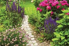 Plates-bandes de plantes vivaces - Immovert