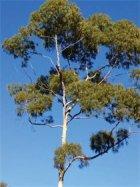 Tree Service is lead by the best Tree Arborist in Tucson, Arizona.