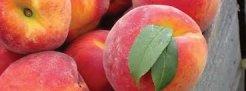IMAGE via http://foundwalls.com/red-peaches/