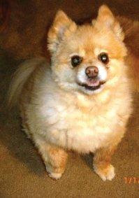 Jake - My beloved dog