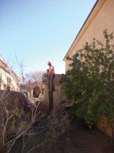 Tree Removal Service in Tucson, Arizona.