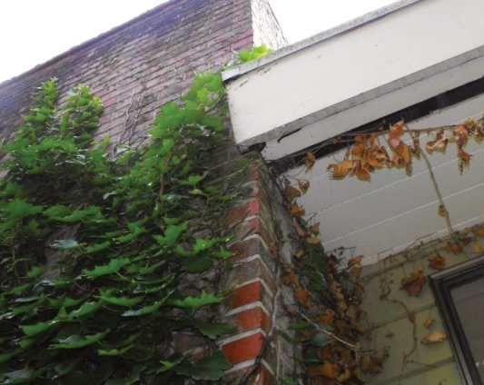 Vines crawling up the side of your house, garage or shop create a great ladder for rodents to use to climb up to your roof line & find entry points into your home.  Be sure to cut back the vegetation around the structures on your property to reduce the chance of rodents gaining entry into your home & other buildings.