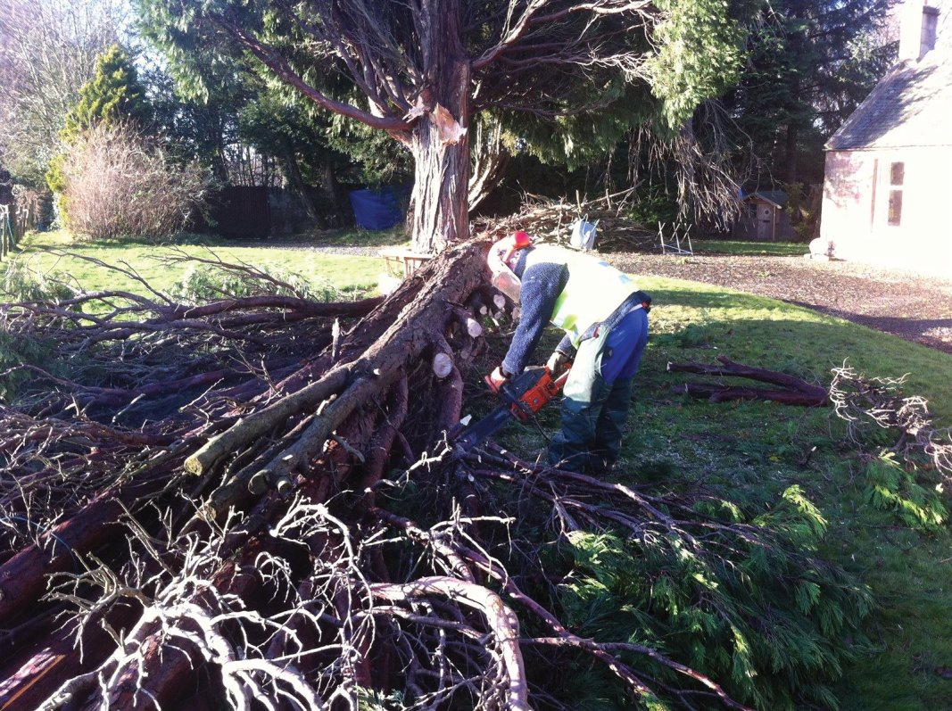 Storm felled tree removal in Dalkeith and Midlothian.