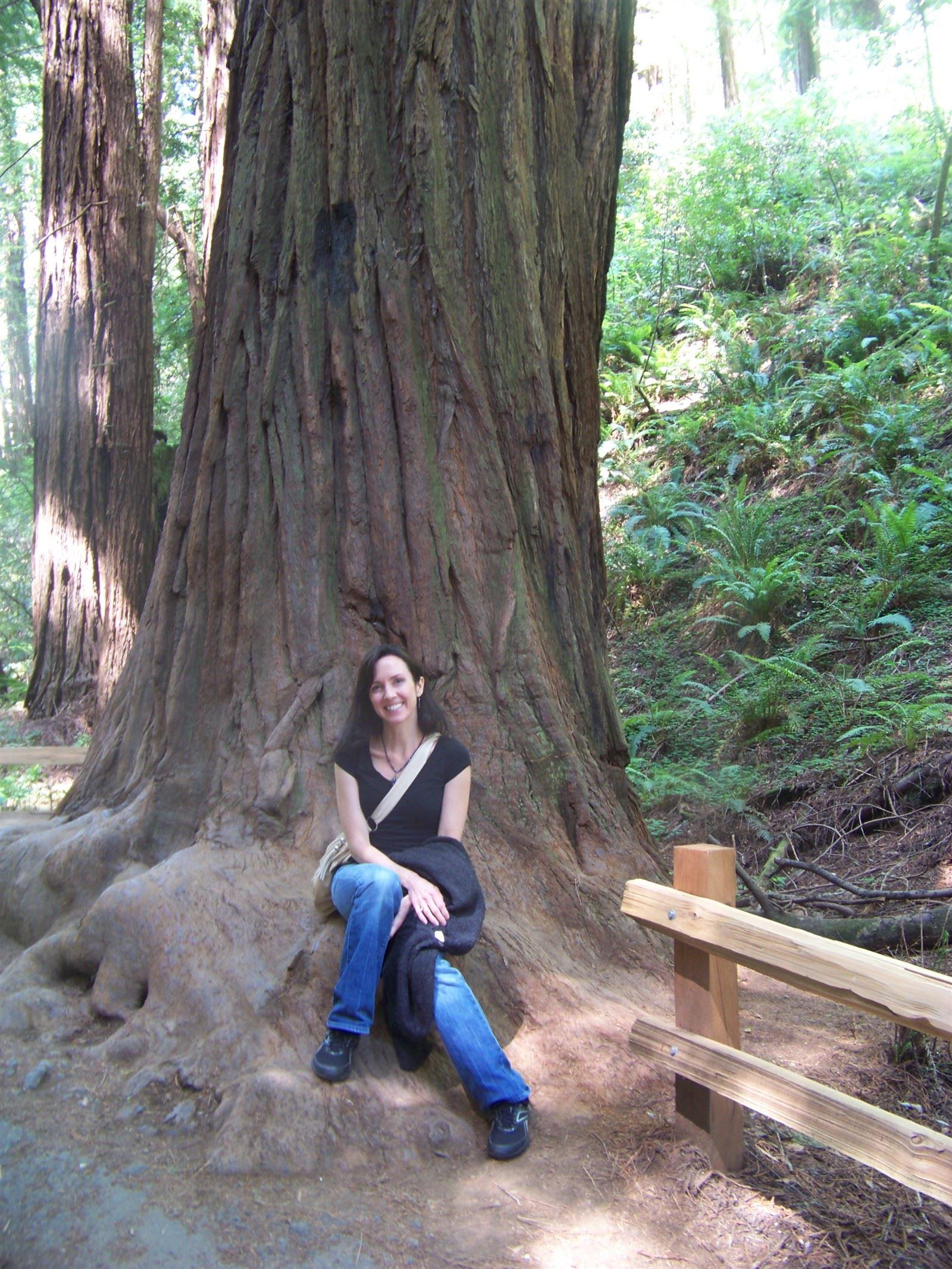 Muir Woods : Redwood in Muir Woods