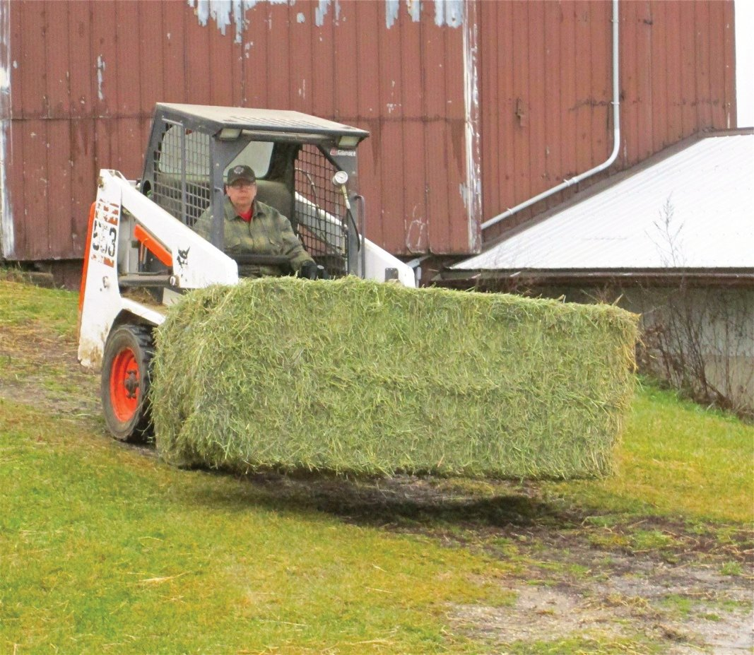 AlpacaDeb brings a fresh large bale of hay to the gals. These bales weigh between 700-900 pounds.