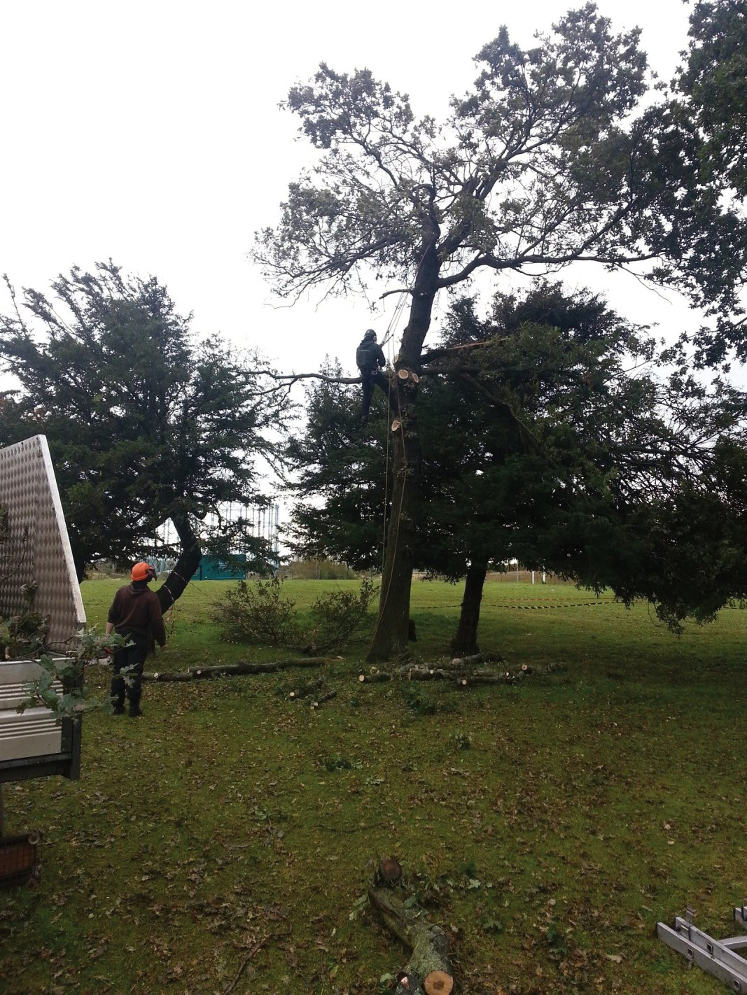Tree surgeon for private gardens, office gardens, industrial areas, factory grounds and business parks in Edinburgh, Midlothian, East Lothian, Fife and the Scottish Borders regions